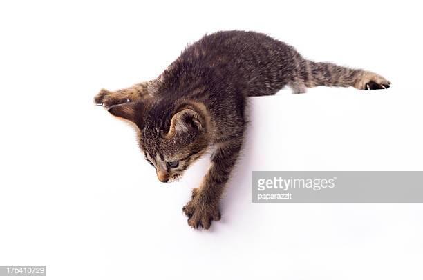piccolo carino gattino - gattini appena nati foto e immagini stock
