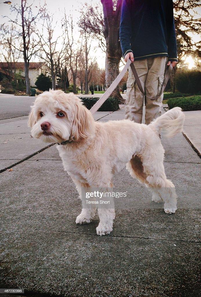 Walking the Dog : News Photo