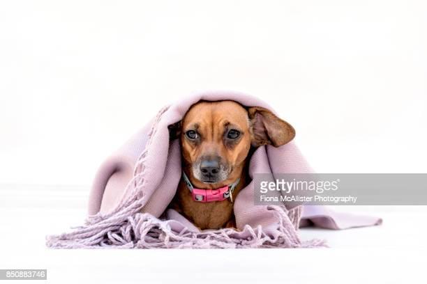 Small dog feeling unwell : Get Well Soon