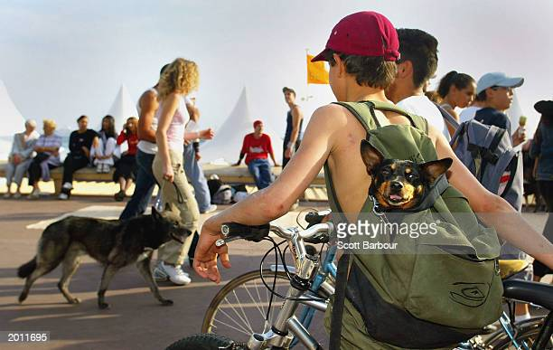 A small dog looks out from his owners backpack during the 56th International Cannes Film Festival 2003 on May 19 2003 in Cannes France Thousands of...