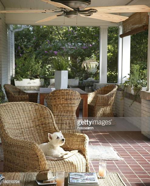Small dog on wicker armchair on porch