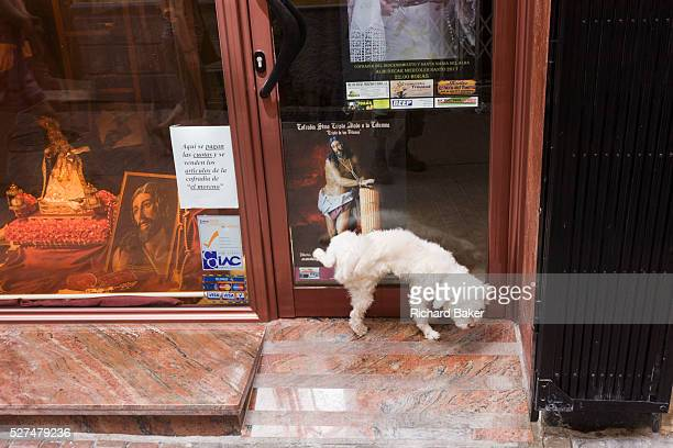 A small dog pees in the doorway of a religious shop in La Herradura on the Costa del Sol Near the depictions of the holy figures of Jesus during...