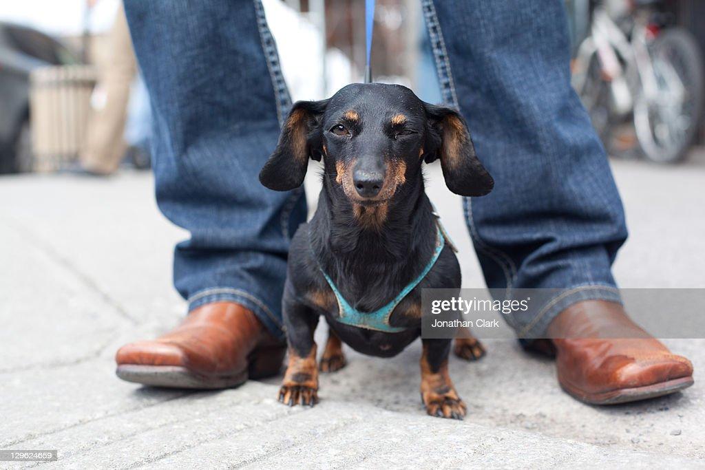 Small dog : Stock Photo