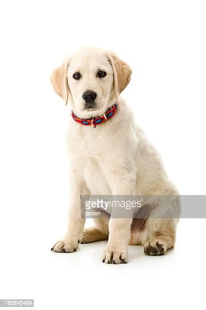 Kleine Hund