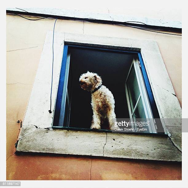 Small dog standing in a window