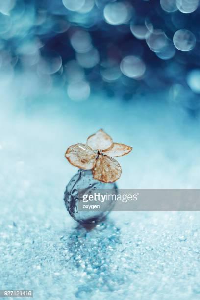 small dried hydrangea flower in glass bottle with bokeh background