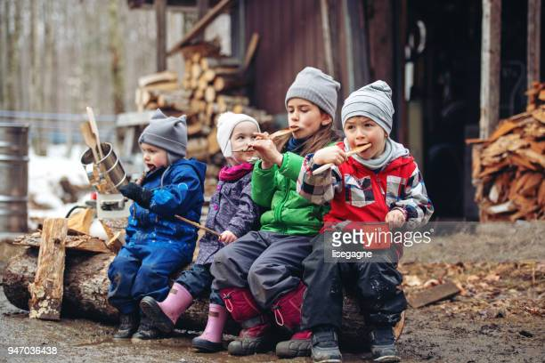 small family business of a maple syrup industry - shack stock pictures, royalty-free photos & images