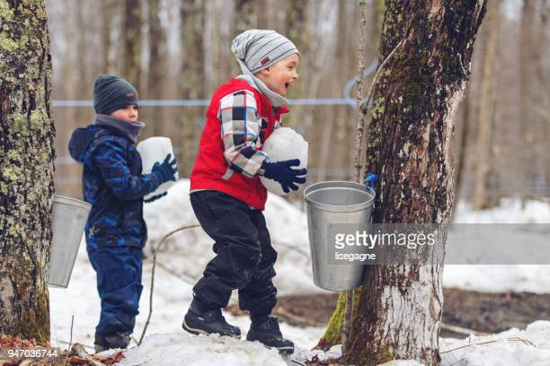 small family business of a maple syrup industry - hut stock pictures, royalty-free photos & images
