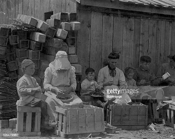 A small family group sits together while hulling berries at Johnson's Hulling Station Seaford DE 1911