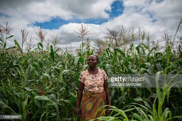 Small farmer and single mother Imelda Hicoombolwa poses for a portrait with her crops in Kaumba on January 21, 2020. - Imelda Hicoombolwa is part of...