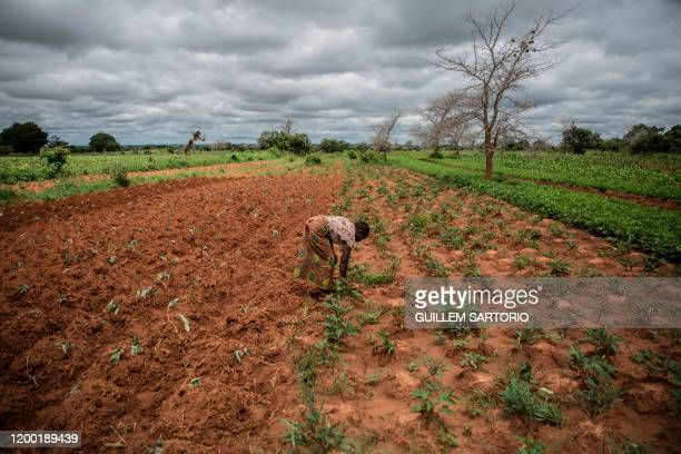 Small farmer and single mother Imelda Hicoombolwa removes weeds from her field in Kaumba on January 21, 2020. - Imelda Hicoombolwa is part of a...
