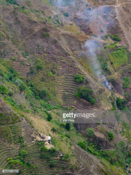 Small farms grow sugar cane on terraces on the steep mountainsides of Santo Antao Republic of Cabo Verde Africa