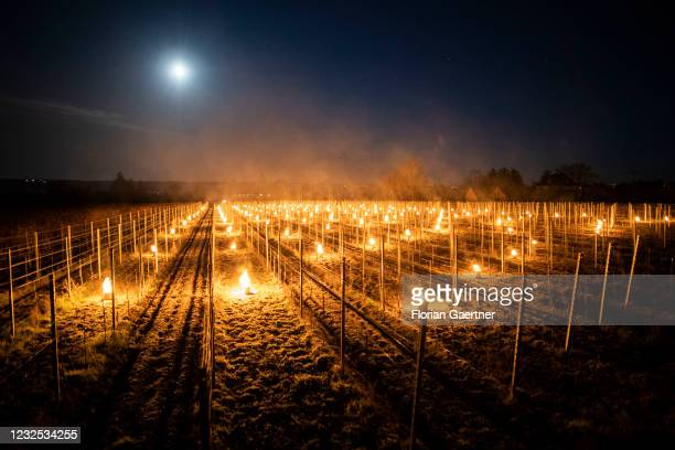Small fires burn in a vine yard of the wine-growing area Schloss Wackerbarth near Meissen in Saxony on April 26, 2021 in Weinboehla, Germany. The...