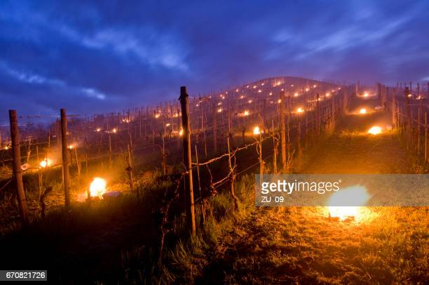 Small fires on the vineyard - Frost protection in spring