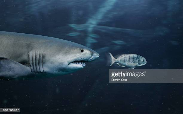 small fish being chafes by big shark - hunting stock pictures, royalty-free photos & images