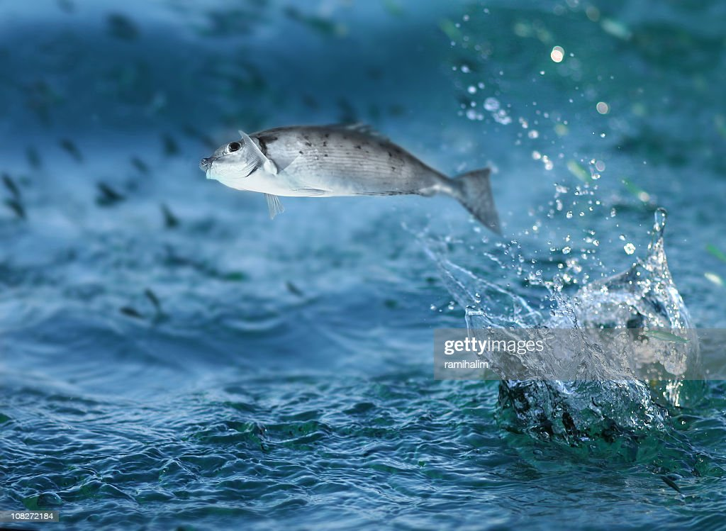 Small fish jumping out of water : Stock Photo
