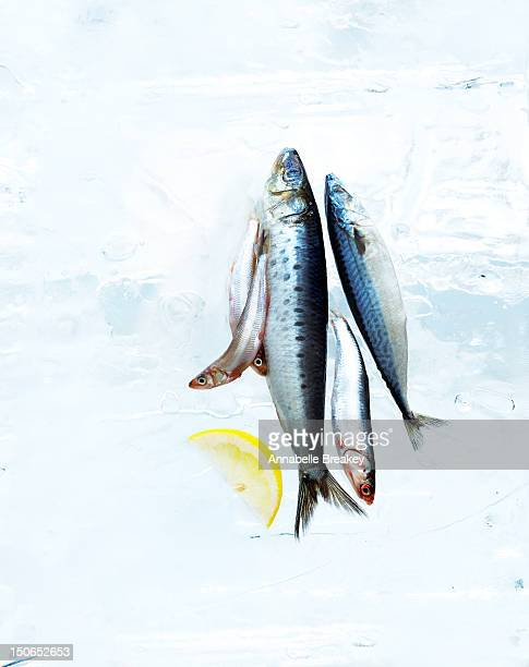 small fish on block of ice with lemon slice - mackerel stock pictures, royalty-free photos & images