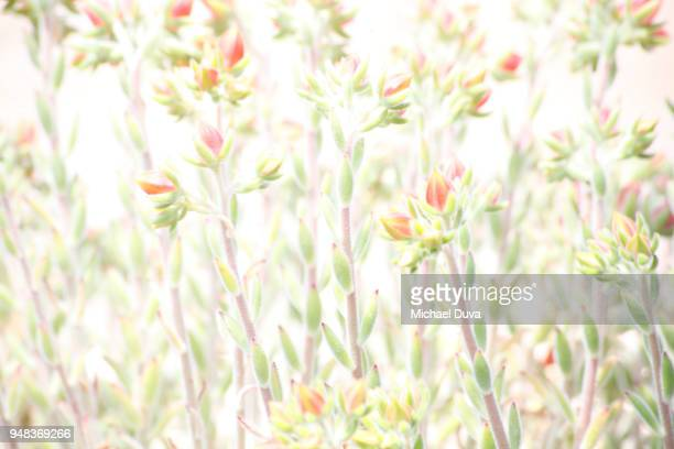 Small flowers brightly lit for background