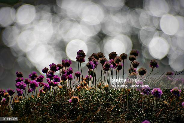 small flowers with white light dots - s0ulsurfing stock pictures, royalty-free photos & images