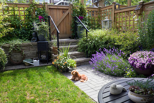 free dog in backyard images