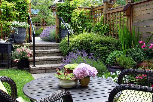 Small garden 584877834