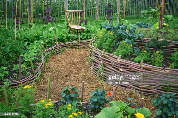 small garden - niet gecultiveerd stockfoto's en -beelden