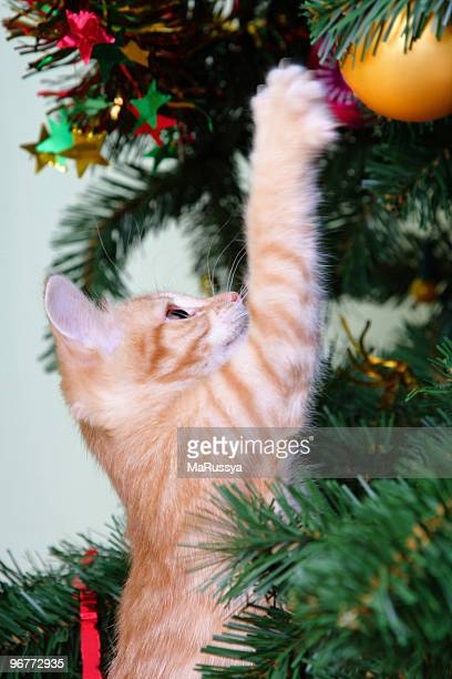 Small ginger kitten clawing at a bauble on a Christmas tree