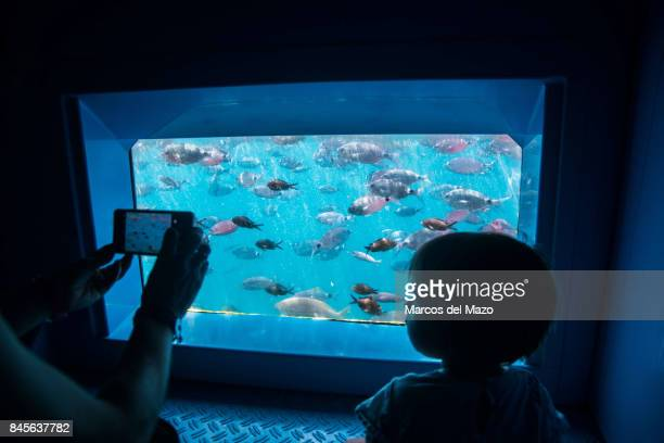 A small girl and woman watching fish inside a ferry with submarine vision on their way to Tabarca Tabarca is a small islet located in the...