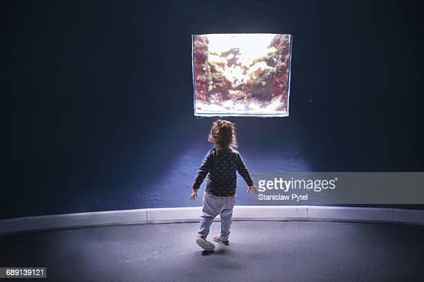 Small girl looking at aquarium