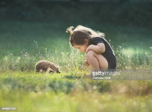 small girl looking at hedgehog on grass - curiosity stock pictures, royalty-free photos & images
