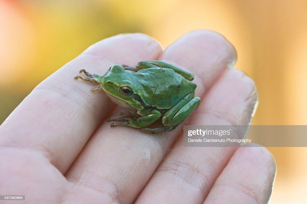 Small green friend : Stock Photo