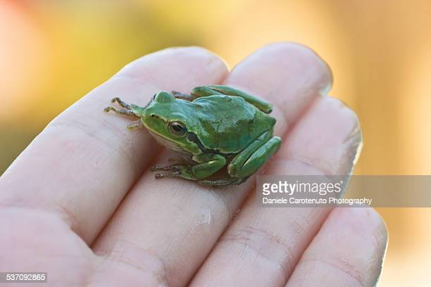 small green friend - daniele carotenuto stock pictures, royalty-free photos & images