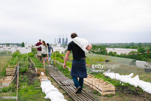 kleingruppe gartenarbeit auf einem städtischen garten - aktiver lebensstil stock-fotos und bilder