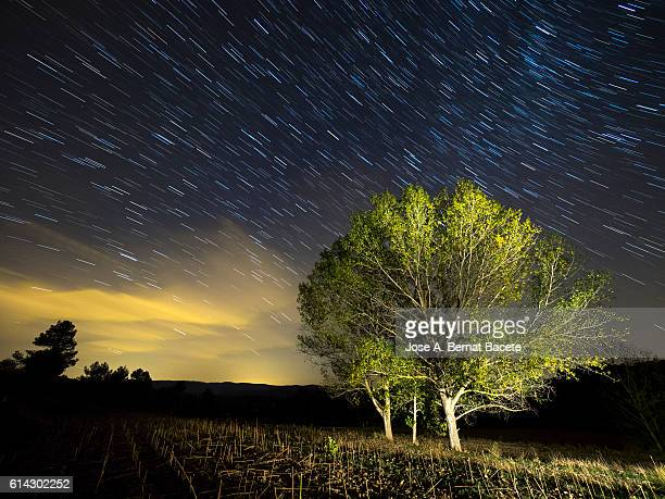 Small group of trees with colorful leaves under a night sky of stars moving