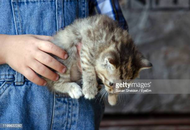 small hands hold a new baby kitten that was found in the barn - by sheldon levis fotografías e imágenes de stock