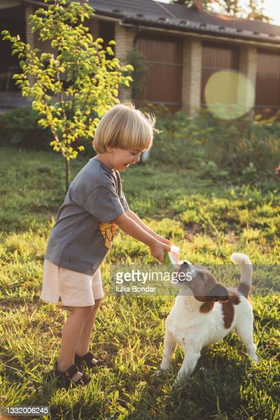small happy boy playing with his pet - friendly match stock pictures, royalty-free photos & images