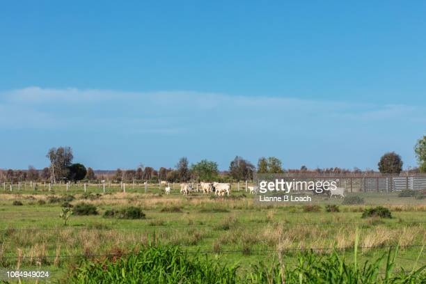 small herd 8 - lianne loach stock pictures, royalty-free photos & images