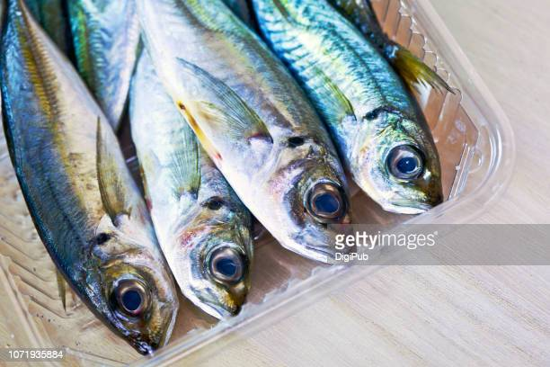 small horse mackerel fish in plastic tray on wood - trachurus stock pictures, royalty-free photos & images