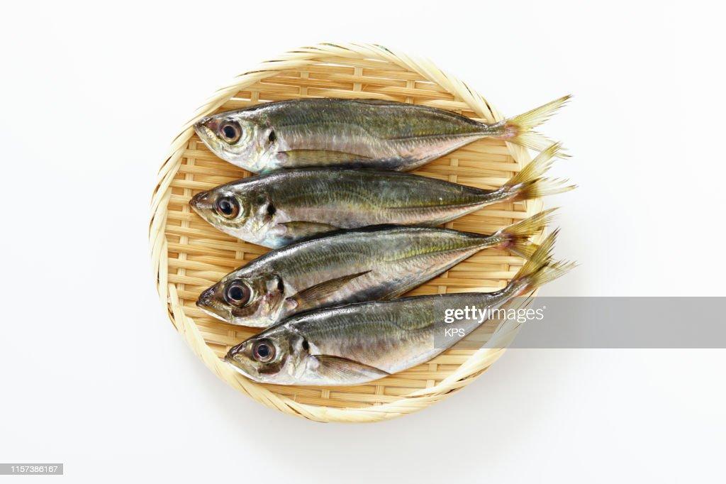 small horse mackerel : Stock Photo