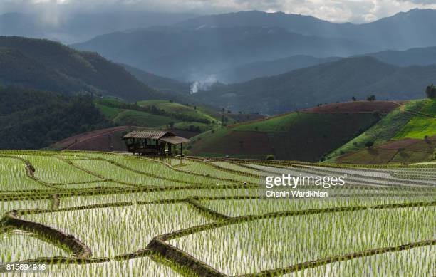 small house in the middle of the field surrounded by mountains,beautiful and relaxation - java indonesia fotografías e imágenes de stock