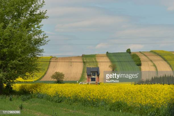 Small house surrounded by colorful farm fields near Nowe Brzesko. From May 18th, the third face of unfreezing the economy and loosening restrictions...