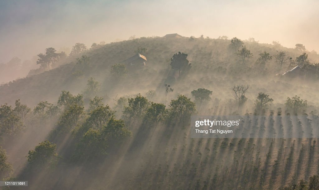 Small houses in the hill of plantation in mist : Stock Photo
