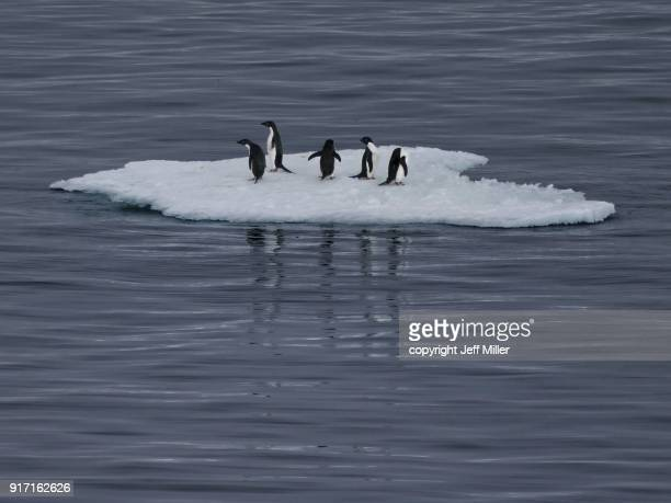 Small iceberg with five Adelie penguins, Southern Ocean, Antarctica