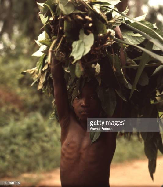 A small Igbo boy gathering useful products from the forest Nigeria Igbo Nigeria