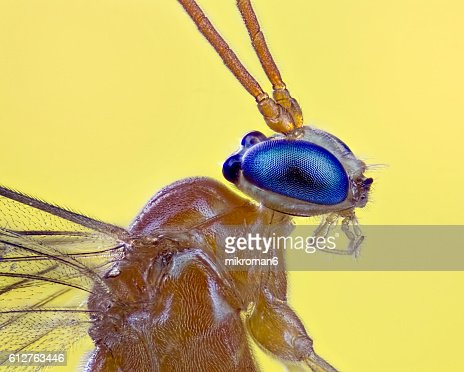 Small insect close up