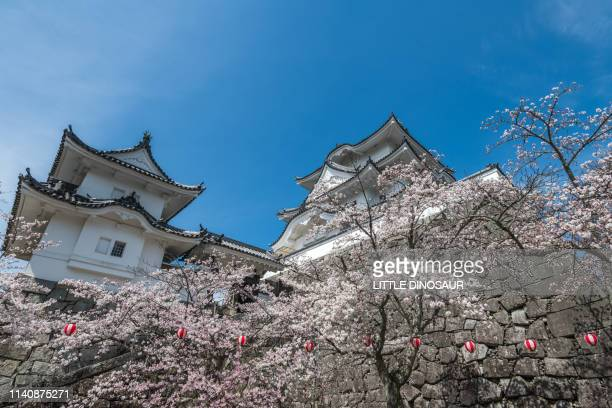 a small japanese castle surrounded by cherry blossoms. iga, mie, japan - 三重県 ストックフォトと画像