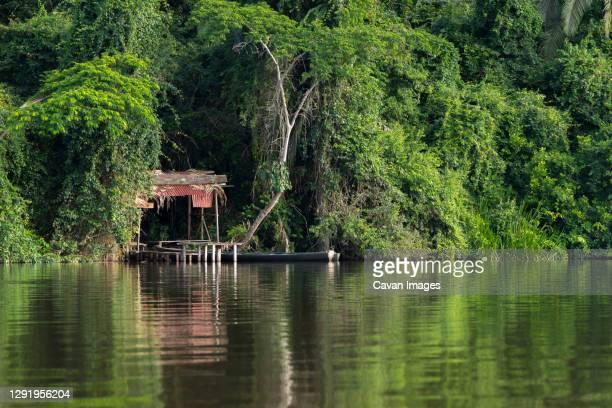 small jetty in peruvian rainforest on lake sandoval, tambopata nature reserve, puerto maldonado, madre de dios region, peru - nature reserve stock-fotos und bilder