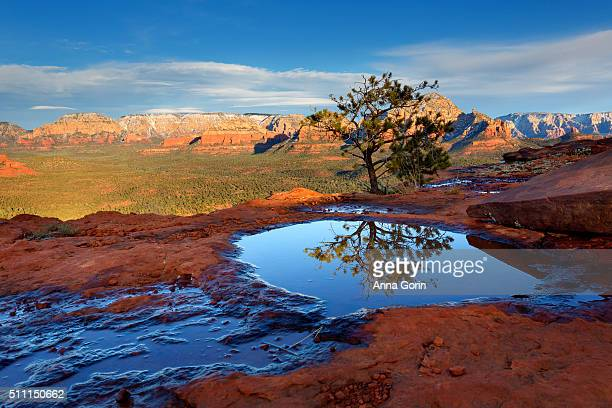 Small Juniper tree reflected perfectly in puddle atop Doe Mountain in Sedona, Arizona, at sunset with snowcapped rock formations in distance across valley