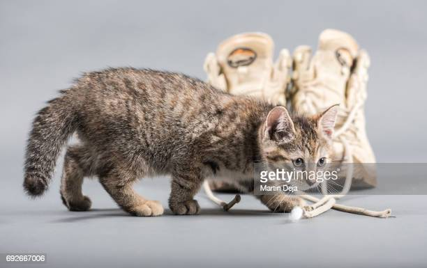 Small kitten with shoes