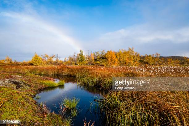 small lake, autumnal landscape with rainbow, norrbottens, norrbottens laen, laponia, lapland, sweden - swedish lapland stock photos and pictures